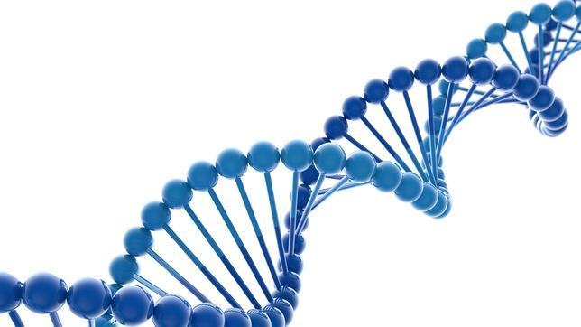 adn-cromosoma--644x362